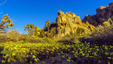 The Blooming Desert -L *****