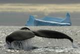 (Sub)antarctic mammals