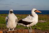 Birds of the Galapagos 2012