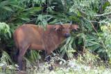 Mammals of Gabon