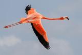 Birds of Central America 2011