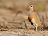 Birds of Gambia 2014