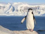 Birds of Subantarctic islands and Antarctica 2010