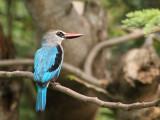 Birds of Togo and Benin 2011/2012