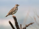 Birds of Bulgaria 2011