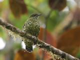 Birds of Ecuador 2012