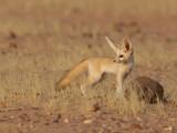Mammals of Chad