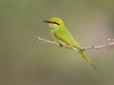 Birds of Chad 2016