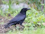 Birds of the United Kingdom