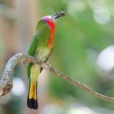 Birds of Thailand South 2017