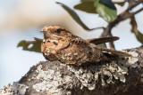 Birds of Angola 2018