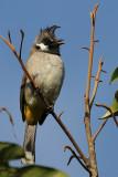 Birds of Nepal 2011