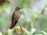 Birds of Northern Peru 2015