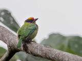 Birds of Arunachal Pradesh + Assam 2014