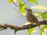 Birds of West Bengal + Sikkim 2015