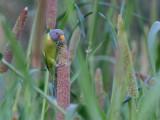Birds of Gujarat 2015