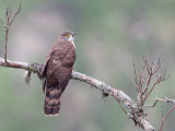 Birds of North-East India 2016