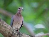 Birds of Guinea 2019/2020