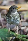 Birds of São Tomé and Principe 2019