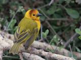 Birds of Kenya 2020