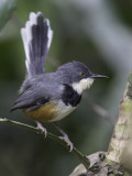 Birds of Kenya 2021