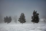 Snow and Fog