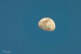 Daytime moon, waxing gibbous