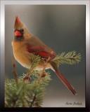 Female Cardinal on a gloomy day