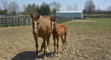 Early injury horsing around
