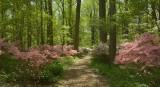 Winterthur Gardens