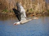 Vogels in de Vlucht / Birds in Flight