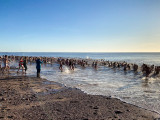 Budleigh Salterton Christmas Morning Swim