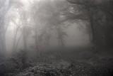 Ashridge mist-2.jpg