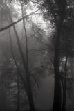 Ashridge mist.jpg