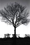 Silhouette Tree.jpg