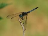 damsel_fly.JPG