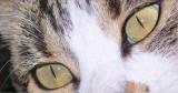 Marley eyes.jpg