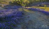 Lupines @ Folsom Lake April 2021