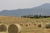 Summer in La Toscana