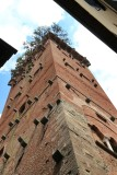 Lucca. Torre Guinigi