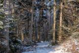 forêt des pandours