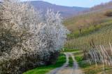 le printemps à Albé