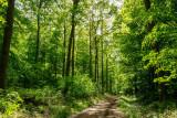 la forêt de Heiligenberg