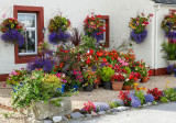 flowered house, Cromarty