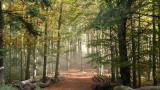 la forêt de La Vancelle
