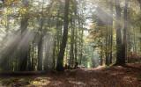 sun rays trough the trees La Vancelle