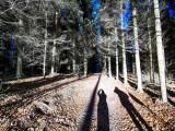 forêt de la Rothlach