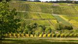Rosenwiller vineyard