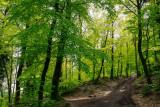 la forêt du Geroldseck