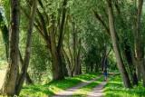 la forêt d'Eu